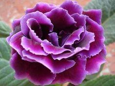 Поможем глоксинии зимовать | Комнатные растения и цветы