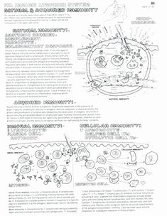 Immune system coloring page Biology, Human body systems