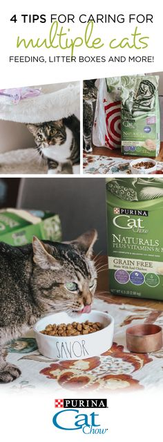 Tips for Caring for Multiple Cats, Diy Abschnitt, Healthy Cat Food, Best Cat Food, Dry Cat Food, I Love Cats, Cute Cats, Benadryl For Cats, Toxic Plants For Cats, Siberian Cats For Sale, Homemade Cat Food
