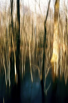 Duennwald Frozen Swamp 1 | Abstract