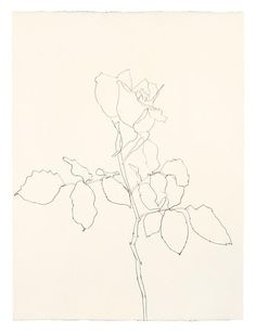 Ellsworth Kelly Rose 1983 Graphite on paper 24 1/8 x 18 inches