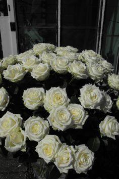 Witte rozen, Historische Tuin Aalsmeer