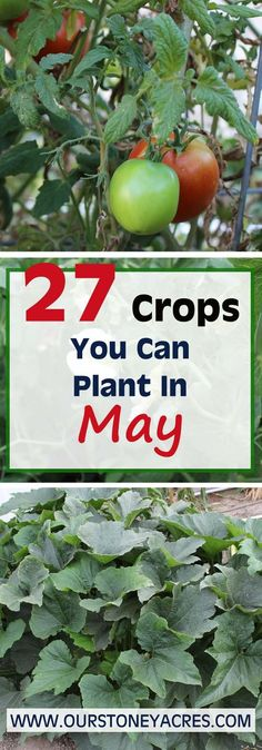 May Planting Guide – 27 crops to plant this month    May.  4,  2017  For zones 4 to 6 May is the time when the bulk of your warm weather crops are planted. This May planting guide will cover all the warm season crops that should be planted this month.