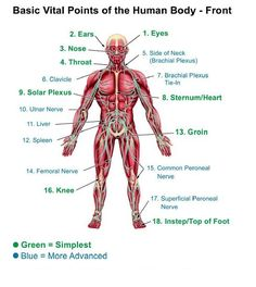 Self-Defense Pressure Points | ... areas to strike is of great importance when it comes to self defense