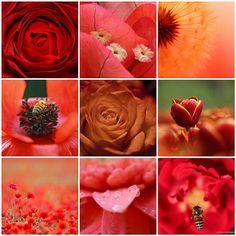 Things i ♥ Thursdays - 04| Red Flowers