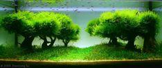 Живые пейзажи под водой