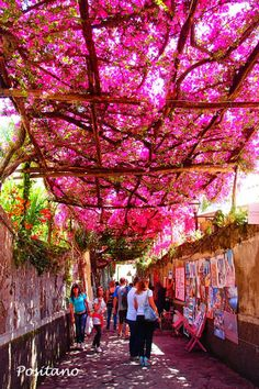 Positano is one of Italy's most romantic and luxurious vacation spots. How pretty is this shot taken of one of the local streets?  All walking paths should be covered in Bougainvillea!