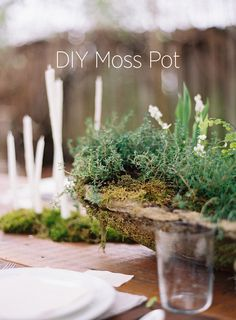 DIY Wedding Centerpiece idea- Moss Pot. This easy to copy DIY moss pot will be a beautiful wedding decor centerpiece for any wedding style. #organicwedding #diyweddingtutorials #diyweddingdecorations #weddingcenterpiecesflowers