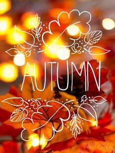 ◖ pinterest: bellaxlovee ◗ Fall Wallpaper, Autumn Leaves Wallpaper, October Wallpaper, Hello Autumn, Autumn Day, Fall Winter, Fall Photos, Fall Pictures, Fall Pics
