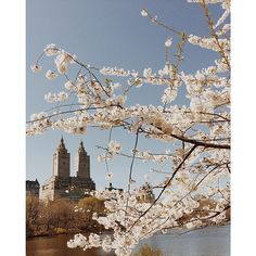 Dreamy Central Park in Spring #newyorkcityinspired
