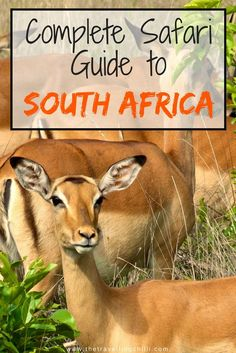 Complete Safari guide to South Africa - safari in South Africa Uganda, All About Africa, South Africa Safari, Africa Destinations, Travel Destinations, Foto Poster, Kruger National Park, Adventure Activities, Game Reserve