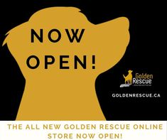 Have you checked out our new and improved Golden Rescue Online Store? What are you waiting for?! Visit goldenrescue.ca and click the 'SHOP' tab to check out all the fabulous items for sale! Every purchase helps Goldens in need. #goldenretriever #rescuedog #onlineshopping #shop Rescue Dogs, Online Shopping, Waiting, Swag, Store, Check, Net Shopping, Larger, Shop