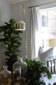 interior design orange county - 1000+ images about Fiddle leaf fig on Pinterest Fiddle Leaf Fig ...