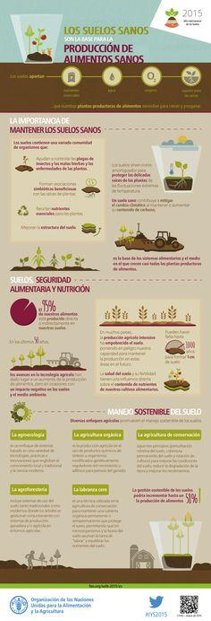 Los suelos sanos son el fundamento del sistema alimentario. Nuestros suelos son la base de la agricultura y el medio en el que crecen casi todas las plantas destinadas a la producción de alimentos.