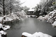 Japanese garden in winter - Yahoo Image Search Results