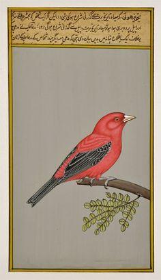 Beautiful Bird - Miniature Painting