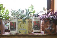 tin(y) garden