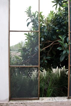 plants and big old metal windows