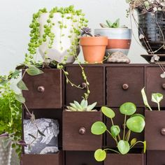 Get the look of apothecary or card catalog drawers with this Ikea hack. These DIY plant drawers are a pretty, vintage-inspired way to display your plants. Homemade Furniture, Homemade Home Decor, Diy Interior, Interior Design, Growing Ginger Indoors, Cactus, Mini Plants, Indoor Plants, Indoor Gardening