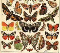 LR vlinders 1