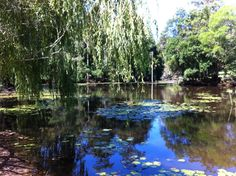 Weeping willow Weeping Willow, River, Outdoor, Beautiful, Outdoors, Outdoor Games, Outdoor Living, Rivers