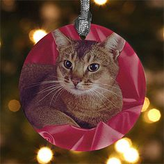 LOVE THIS! You can turn any photo of your cat, dog or anything into an ornament! It's super easy to do - you just upload your photo and it's done! It's on sale now at PMall for only $9.06! I'll have to order these now while they're on sale and wait to give them out as Christmas gifts!