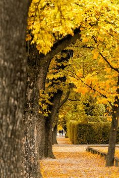 Autumn in Arrowtown by Jonathan Usher