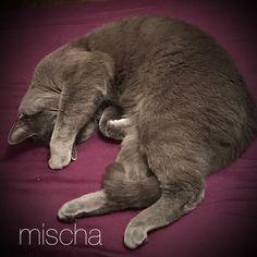 Uyurken ışıktan nefret ederim😾 mischa