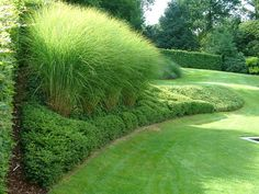 Lonicera taillé et Miscanthus Garden Deco, Love Garden, Garden Pool, Dream Garden, Garden Plants, Garden Edging, Modern Garden Design, Contemporary Garden, Landscape Design