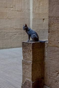 Cats In Ancient Egypt, Ancient Art, Big Cats, Cats And Kittens, Past Life Memories, Small Cat, Gods And Goddesses, Egyptian, Medieval