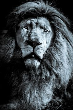 The king by Nicolas Bianchi on 500px