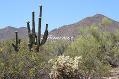 Breathtaking Sonoran Desert in the Spring