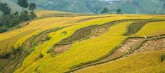 Rice terraces in Mu Cang Chai - Dế Xu Phình North Vietnam, Rice Terraces, Bus Tickets, Bus Travel, Historical Monuments, Places Of Interest, Best Sites, Summer Months, Hanoi