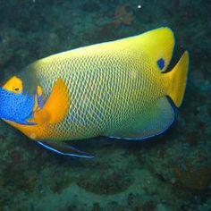 Tropical Fish  Sea - Pixdaus