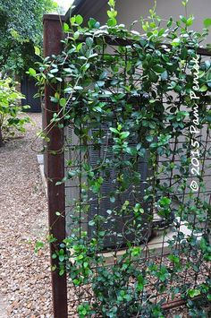 wire trellis with vine (jasmine in this case) to screen utlilties.