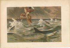 Antique #shark #sharkprint | #Sharkwallart | #Blueshark print | #Shipwreck | #Ichthyologist | #Sharklover | #Sharkgift | #Marinedecor | #Marinelife #vintageprints #sharkattack Shark Gifts, Blue Shark, Life Aquatic, Antique Prints, Vintage Walls, Old Antiques, Decoration, Wall Art, The Originals