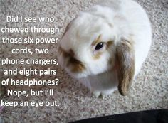 House rabbits can make fantastic companions however you need to fully bunny proof your home