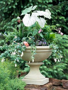 Made for shade - a lovely container garden