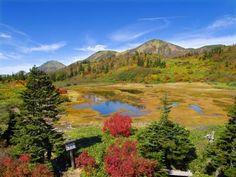 火打登山山頂手前にある高谷池。夏はハクサンコザクラが登山客を魅了し、秋は紅葉が登山客を呼ぶ。近くには高谷池ヒュッテがあり、登山客の憩い場として親しまれている。