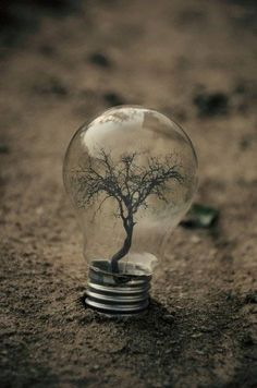"Check out ""diy tree in a light bulb. using any pulled root from the ground resembling a tree, and bulb"" Decalz @Lockerz.com"