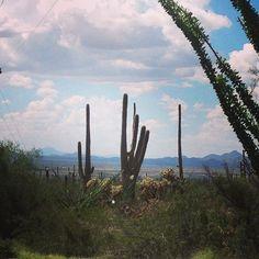 Saguaro Nat'l Park by hjchoi