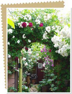降るように咲くバラ 色鮮やかな風景 #130 seaformさん