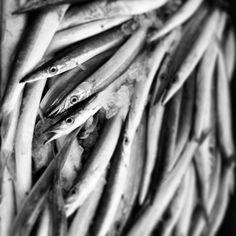 Subhasta de peix febrer 2014 borriana