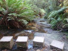 Lillian's Glen walking track Blue Mountain, Places Ive Been, National Parks, Outdoor Decor, Garden Ideas, Track, Walking, Australia, Beautiful