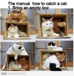 Cats! <3 em