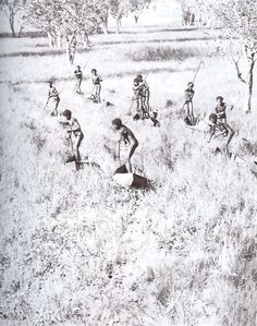 "This photograph was one of many that inspired the movie ""10 Canoes"". ""Goose egg hunters poling themselves through the Arafura swamp. Photograph 1937. From Donald Thomson in Arnhem Land by Donald Thomson, 1983."