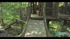 Build a prayer/meditation/sleeping room in the trees.