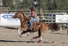 Baker County Rodeo in Halfway, Oregon Sept 2014 Barrel Racing Horses, Horse Racing, Pictures With Horses, Rodeo Life, Western Riding, Quarter Horses, Like Animals, Funny Short Videos, Cowgirls