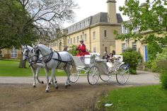 Selection of Horses and Carriages to choose from Bay Horse, Horse Carriage, Horses, Animals, Animales, Animaux, Animal, Animais, Horse