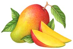 Fruit illustration of a whole mango, two cut mango slices and leaves. Fruit illustration of a whole mango, two cut mango slices and leaves. Fruits And Vegetables Images, Fruits Images, Watercolor Fruit, Fruit Painting, Fruits Drawing, Food Drawing, Art Drawings For Kids, Easy Drawings, Image Fruit